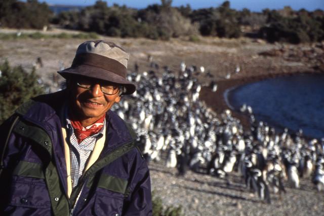 アルゼンチンでは野生ペンギンも観察。アマゾンを含めて南米には何十回も訪れたムツゴロウさんだが、アルゼンチンやチリの南端までは行ったことがないそう