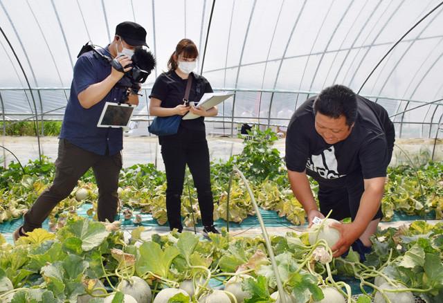日本一の生産量を誇る茨城のメロン。最近は「オンラインメロン狩り」もできるようになったという