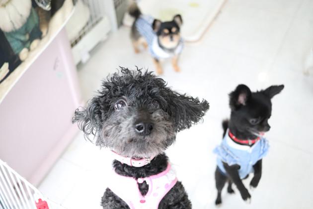 東京・世田谷にあるNPO法人「犬猫みなしご救助隊」の犬猫譲渡センター東京支部。ここで保護犬猫たちと触れ合い、新しい飼い主になることもできる